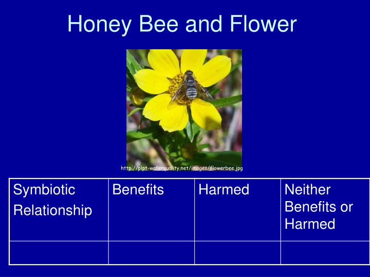 honey bee and flower symbiotic relationship