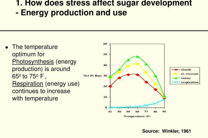 1. How does stress affect sugar development - Energy production and use