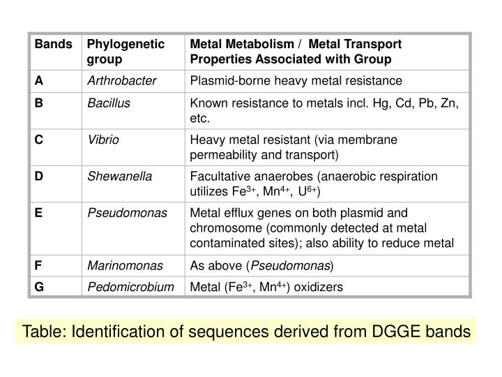 Table: Identification of sequences derived from DGGE bands