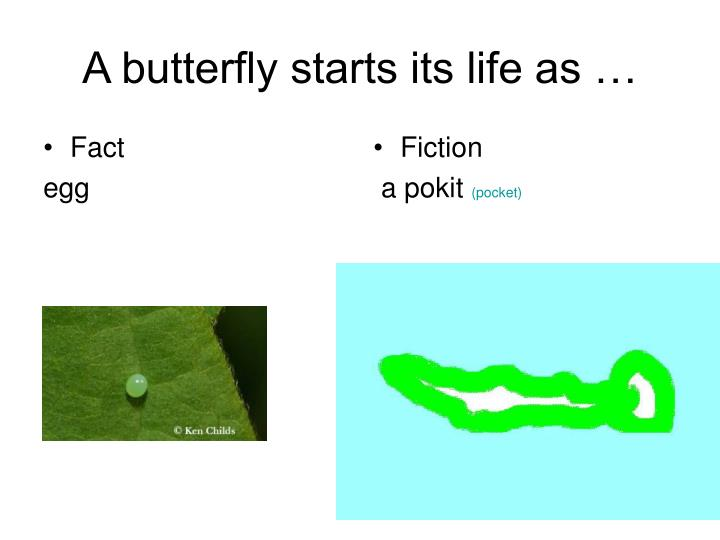 A butterfly starts its life as