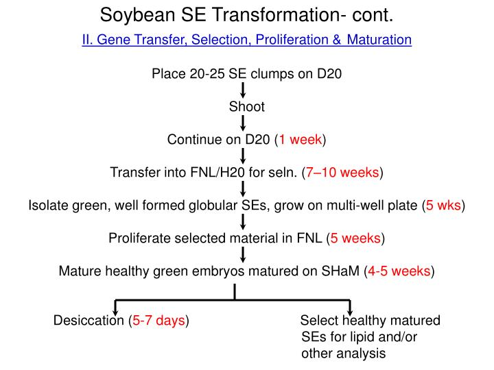 Soybean SE Transformation- cont.