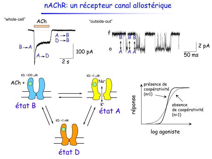 nAChR: un récepteur canal allostérique