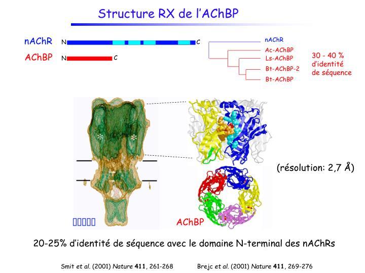 Structure RX de l'AChBP