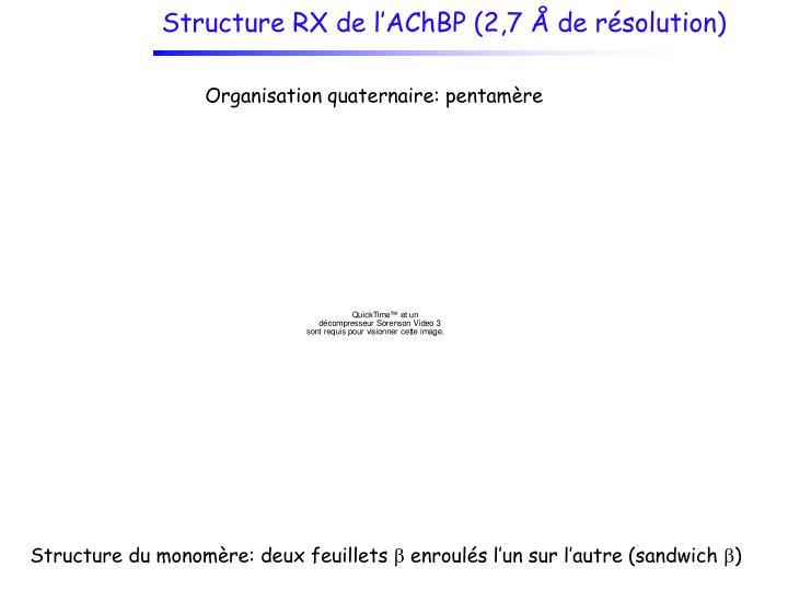 Structure RX de l'AChBP (2,7 Å de résolution)