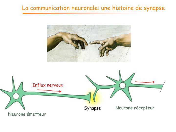 La communication neuronale: une histoire de synapse