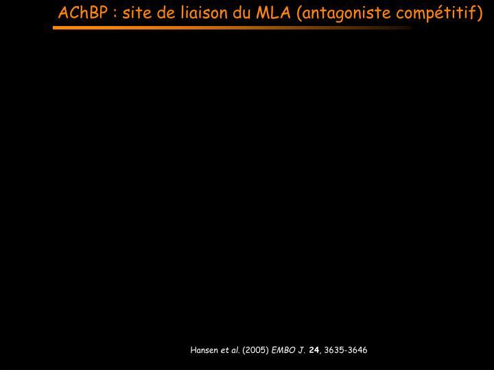 AChBP : site de liaison du MLA (antagoniste compétitif)