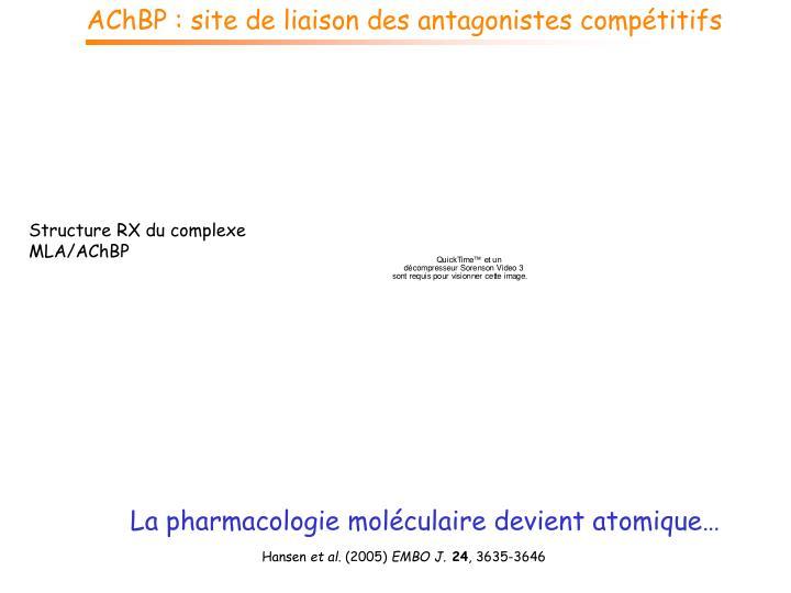 AChBP : site de liaison des antagonistes compétitifs