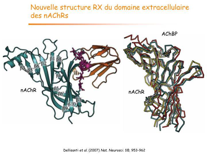 Nouvelle structure RX du domaine extracellulaire des nAChRs