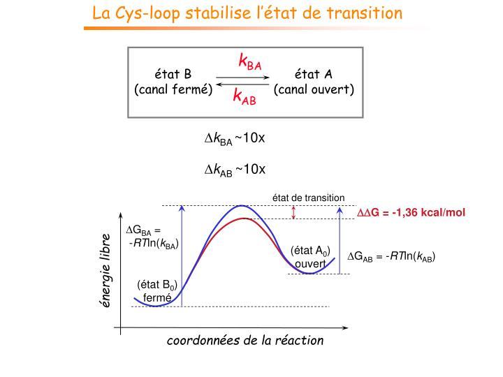 La Cys-loop stabilise l'état de transition