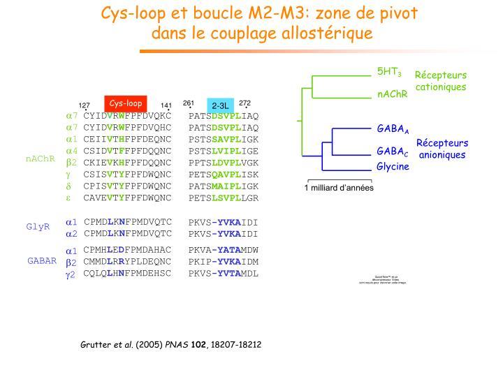 Cys-loop et boucle M2-M3: zone de pivot