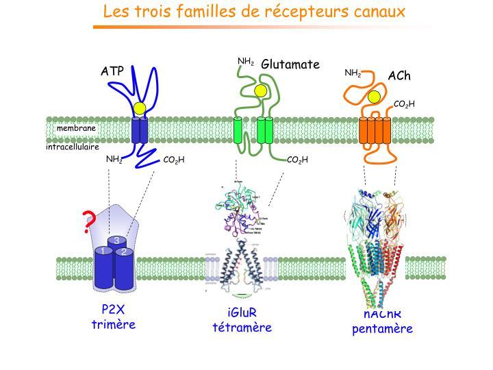 Les trois familles de récepteurs canaux