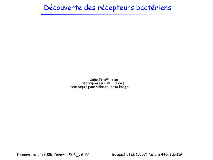 Découverte des récepteurs bactériens