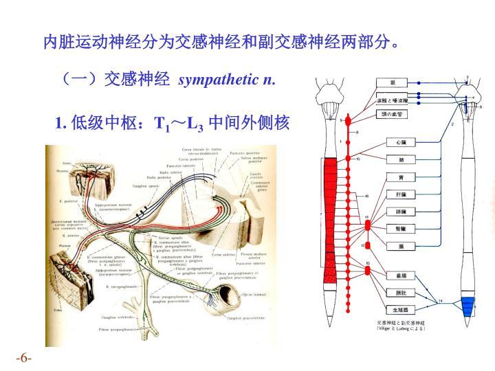 内脏运动神经分为交感神经和副交感神经两部分。