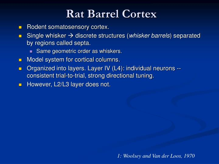 Rat Barrel Cortex
