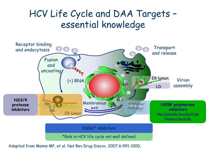 HCV Life Cycle and DAA Targets – essential knowledge