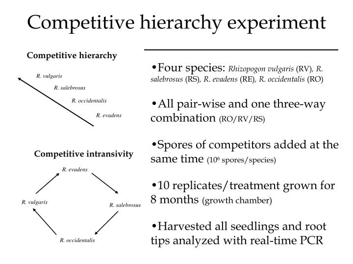 Competitive hierarchy