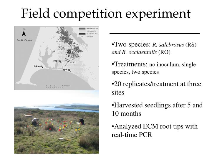Field competition experiment