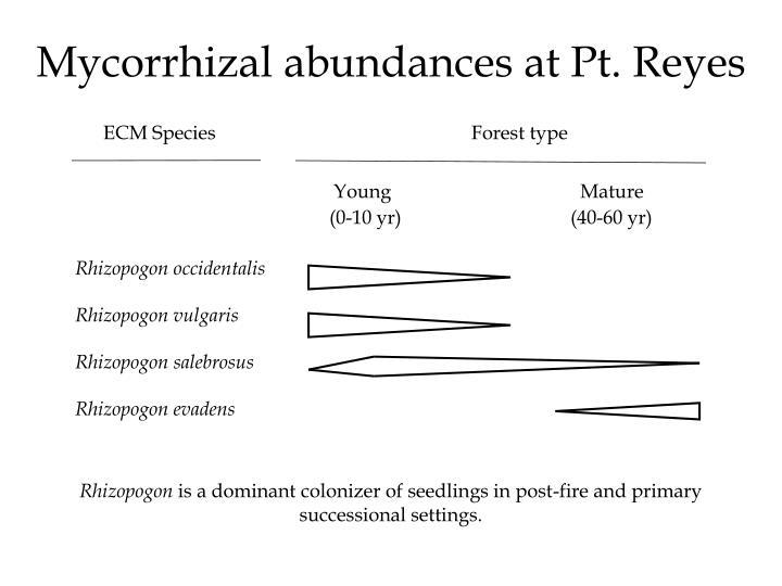 Mycorrhizal abundances at Pt. Reyes