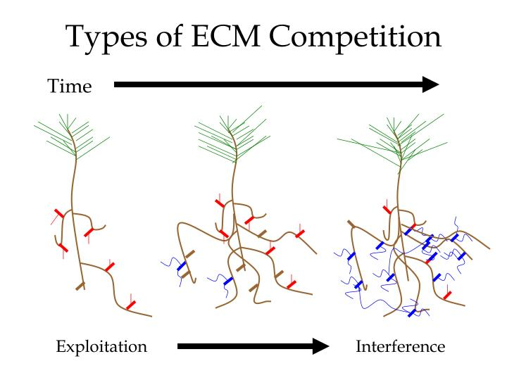 Types of ECM Competition