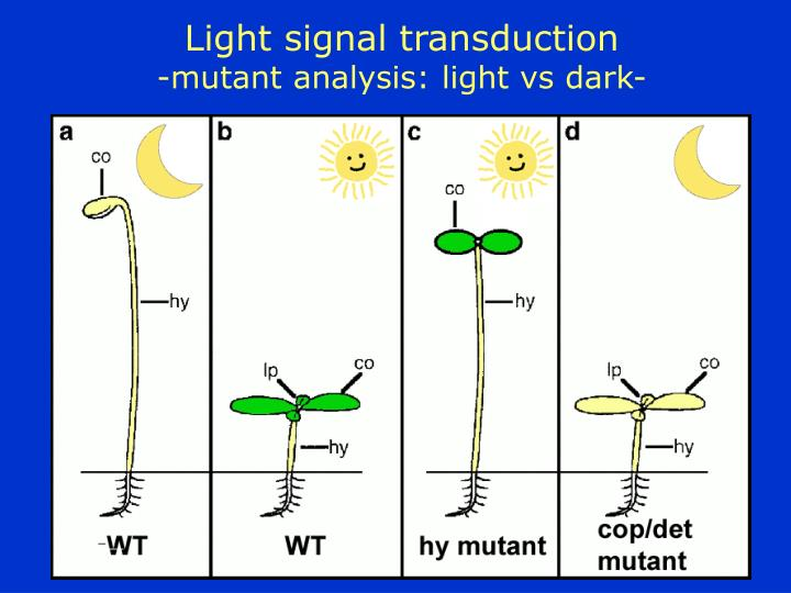 Light signal transduction