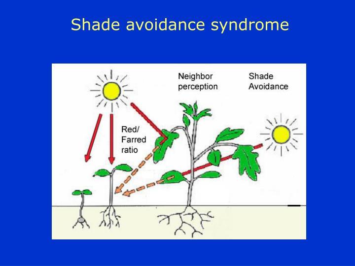 Shade avoidance syndrome