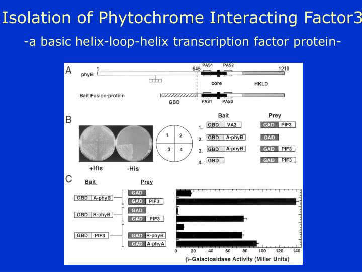 Isolation of Phytochrome Interacting Factor3