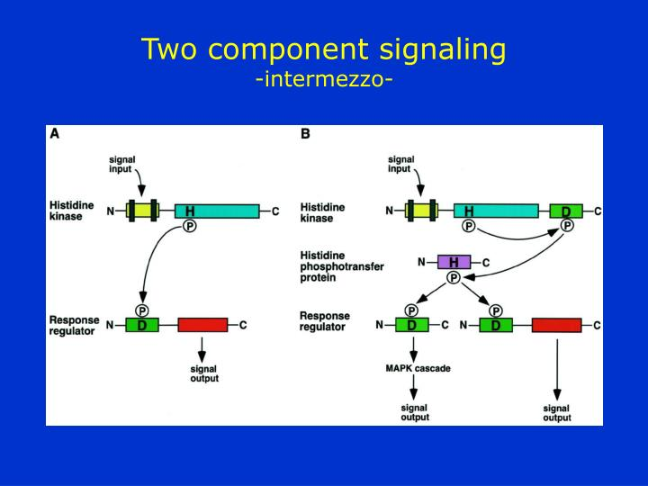 Two component signaling