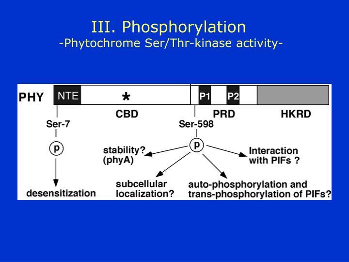 III. Phosphorylation