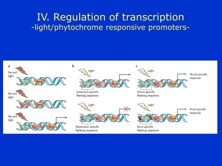 IV. Regulation of transcription