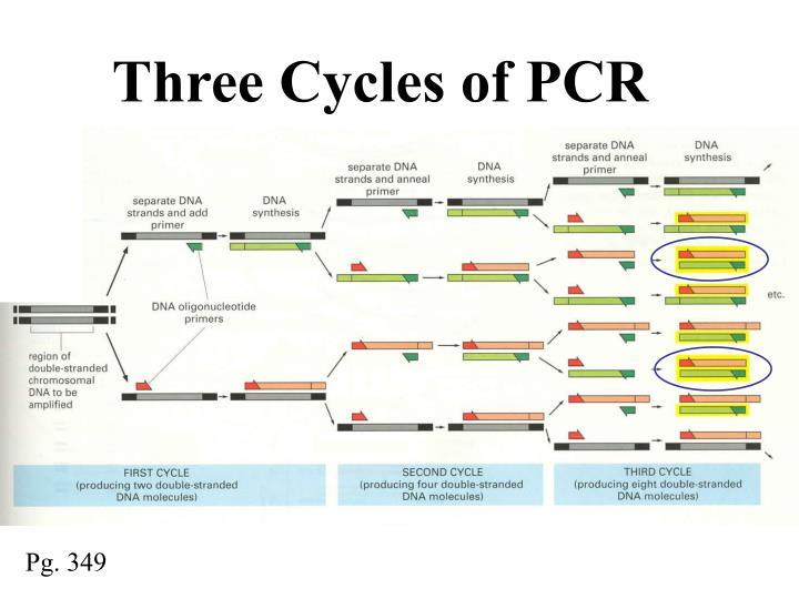 Three Cycles of PCR