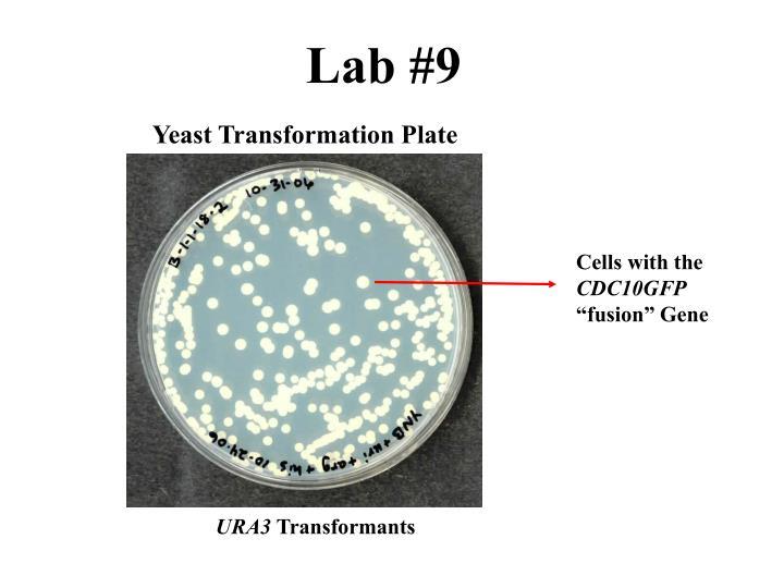 Lab #9
