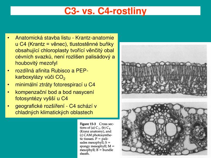 C3- vs. C4-rostliny