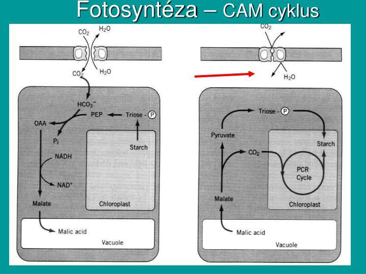 Fotosyntéza –