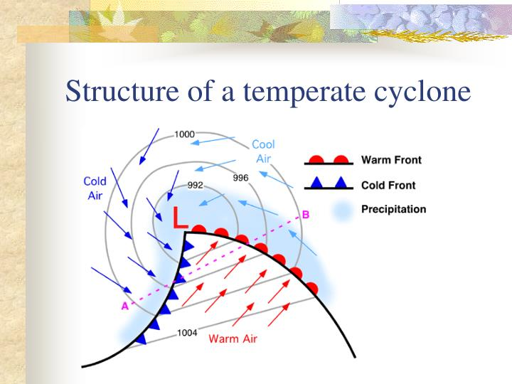 Structure of a temperate cyclone