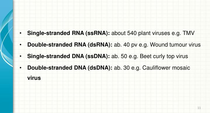 Single-stranded RNA (ssRNA):