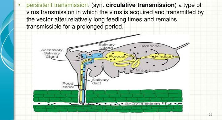 persistent transmission