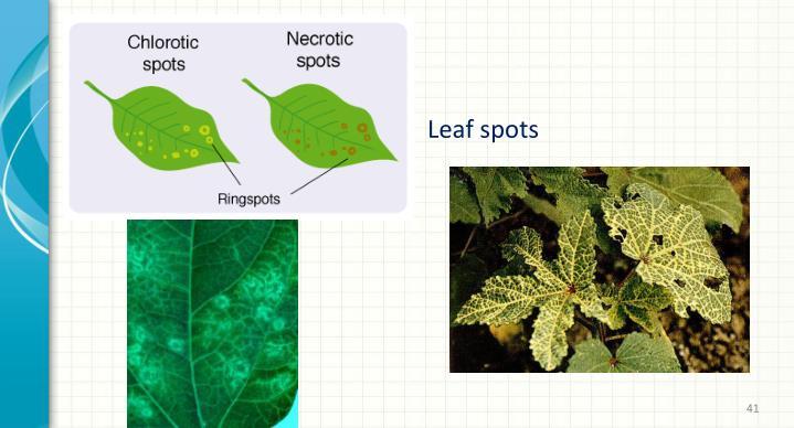 Leaf spots