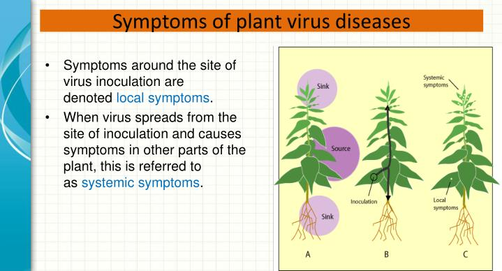 Symptoms of plant virus diseases