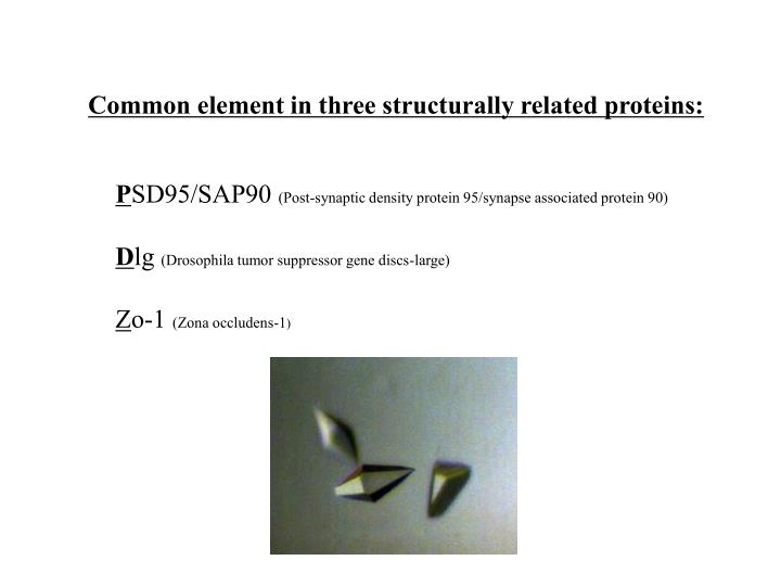 Common element in three structurally related proteins: