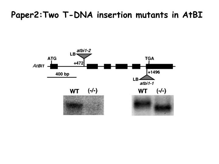 Paper2:Two T-DNA insertion mutants in AtBI