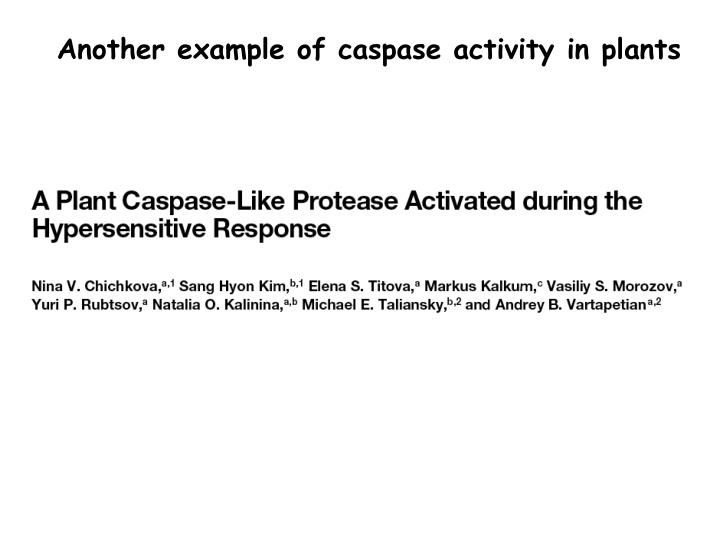 Another example of caspase activity in plants