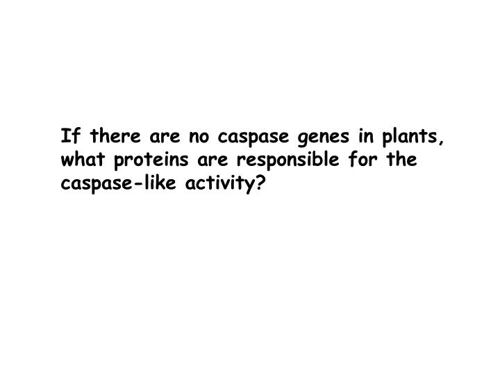 If there are no caspase genes in plants, what proteins are responsible for the caspase-like activity?