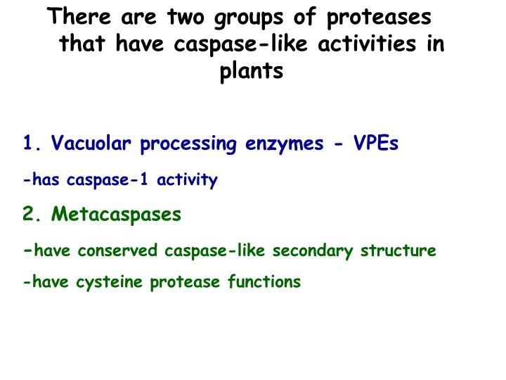 There are two groups of proteases that have caspase-like activities in plants