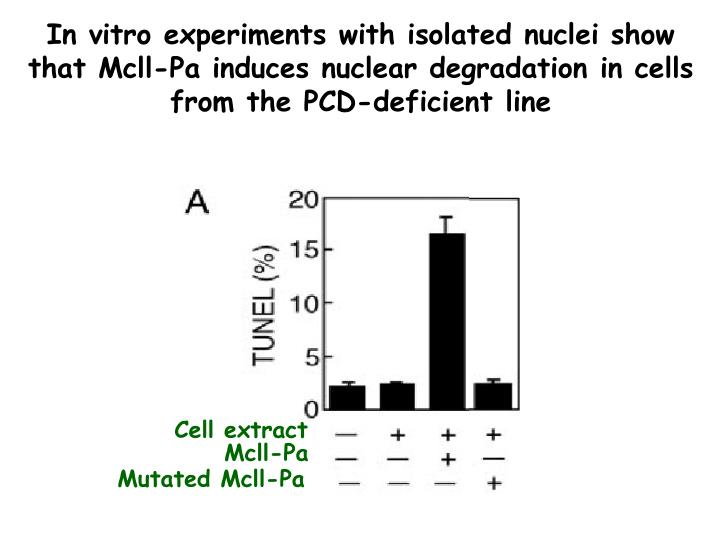 In vitro experiments with isolated nuclei show that Mcll-Pa induces nuclear degradation in cells from the PCD-deficient line