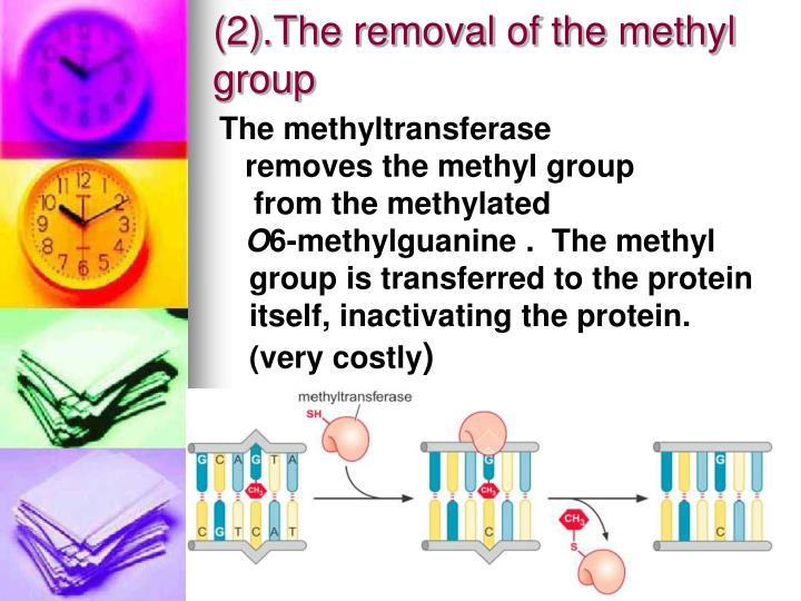 (2).The removal of the methyl group