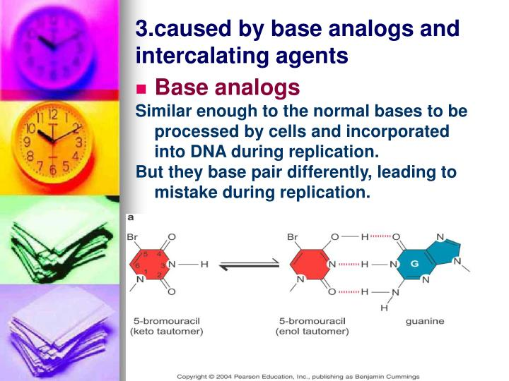 3.caused by base analogs and intercalating agents