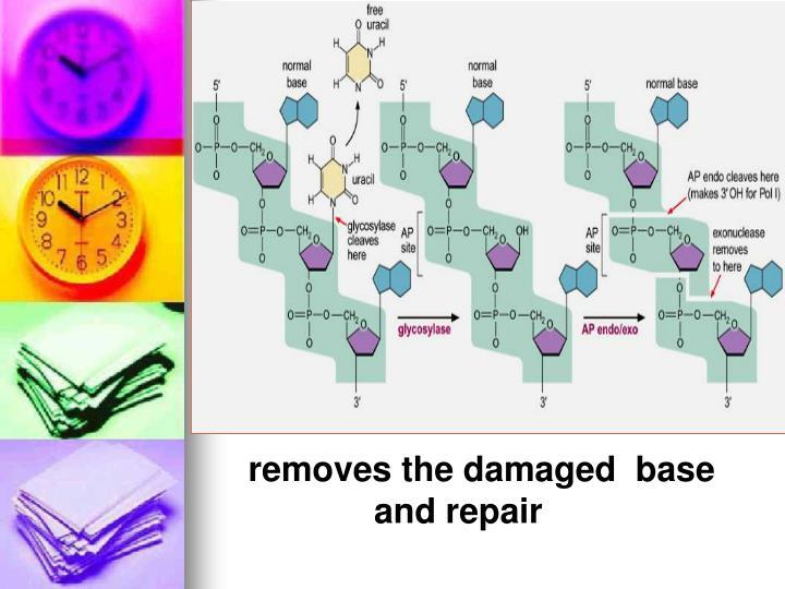removes the damaged  base