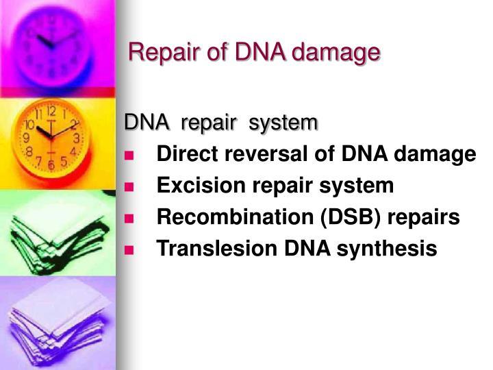 Repair of DNA damage
