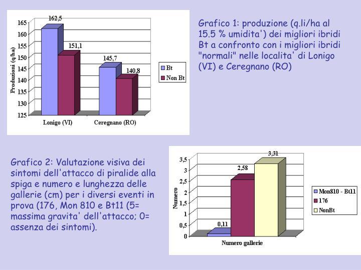 """Grafico 1: produzione (q.li/ha al 15.5 % umidita') dei migliori ibridi Bt a confronto con i migliori ibridi """"normali"""" nelle localita' di Lonigo (VI) e Ceregnano (RO)"""