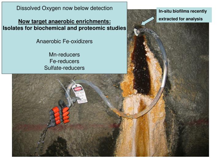 Dissolved Oxygen now below detection